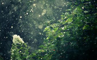 #23 Rain Wallpaper