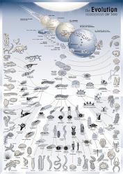 Evolutionary Chart