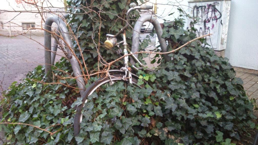 eingewachsen überwuchert Dornröschen vergessen verloren