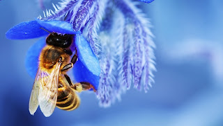 beautiful bee, bee nest, blue flower
