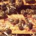 [Coup de Pouce] Parce que les abeilles, c'est super important