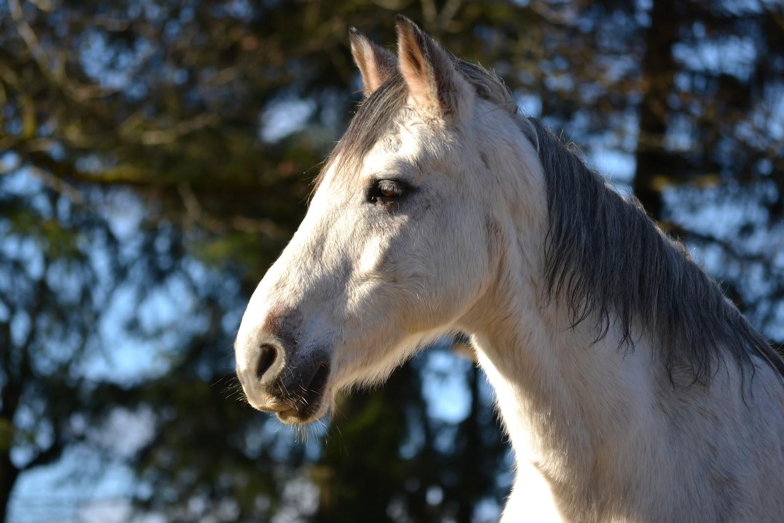 Centrequestremeymac chevaux - Cheval rebelle ...