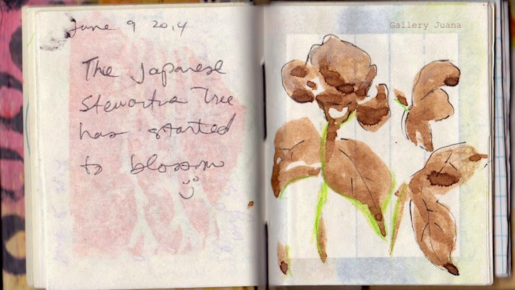 japanese stewartia, galleryjuana