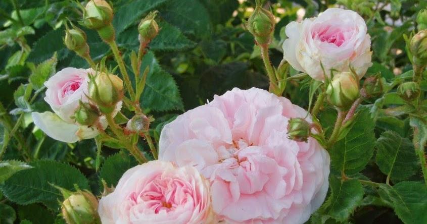 Arte Y Jardiner A Dise O De Jardines Rosales Alba