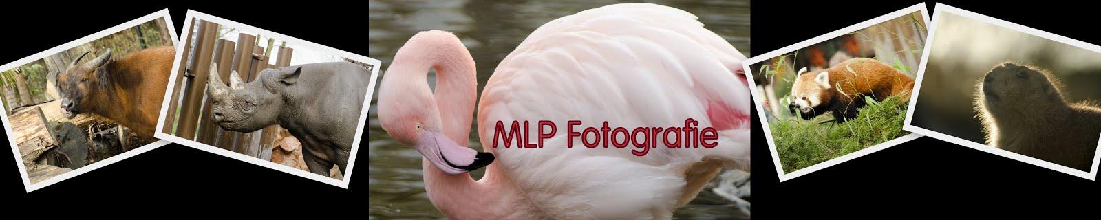 MLP Foto's