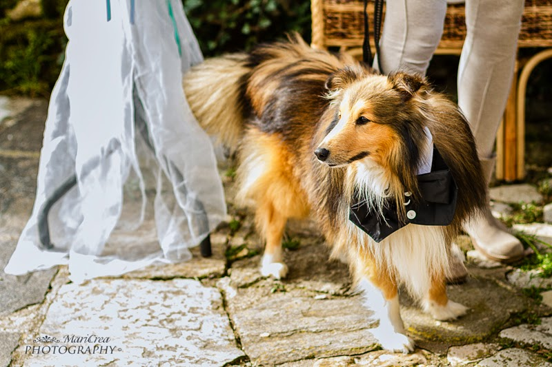 weddingdogsitter