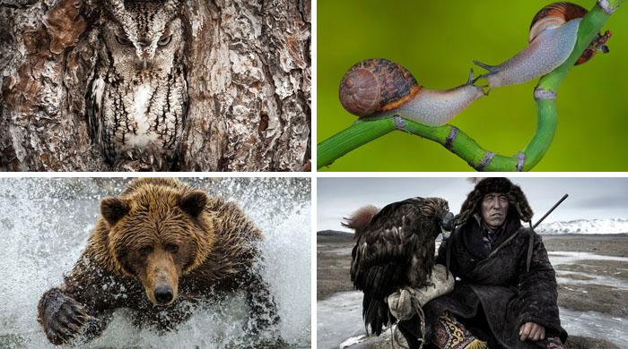 Finalistas del concurso fotográfico del Smithsonian 2014