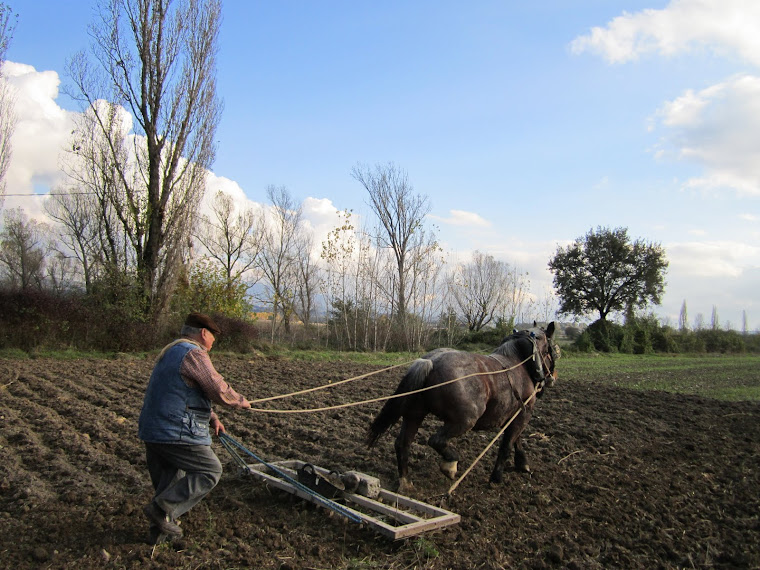 La Menuda i en Ton rasclant el camp. Festa de la sembra del blat a Malla 2011