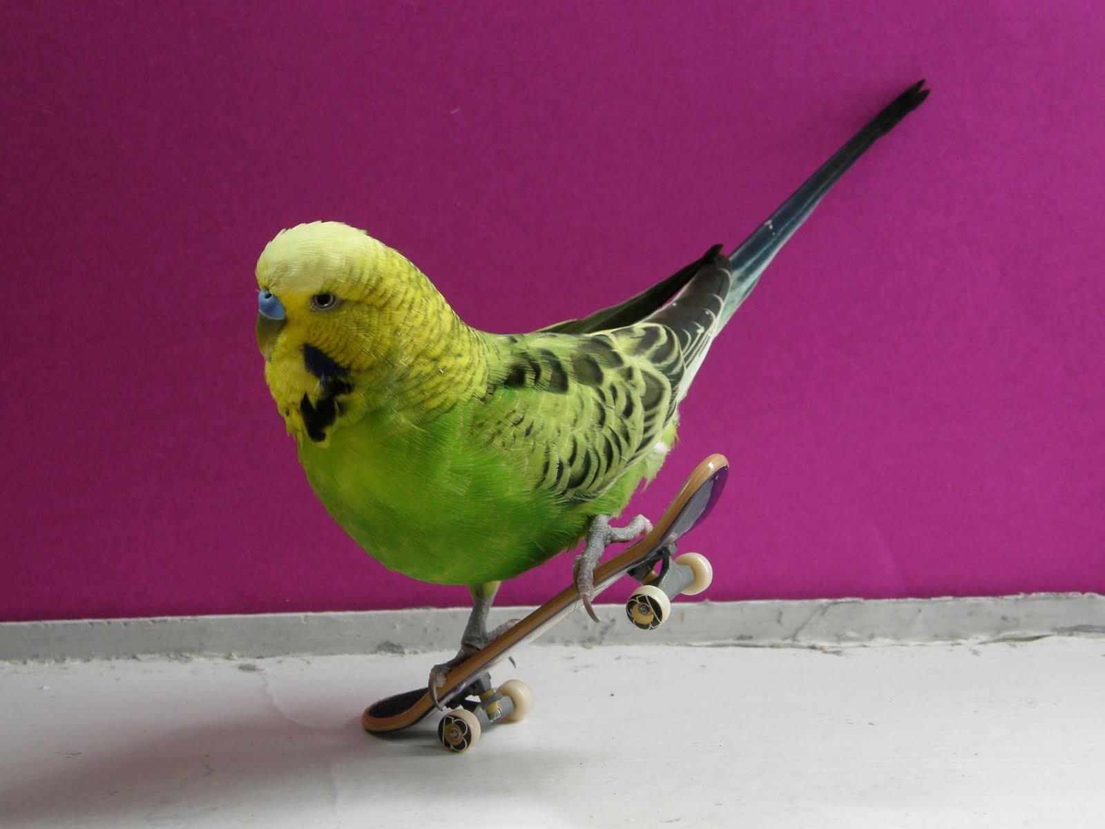 Best Hd Wallpapers Birds Wallpaper
