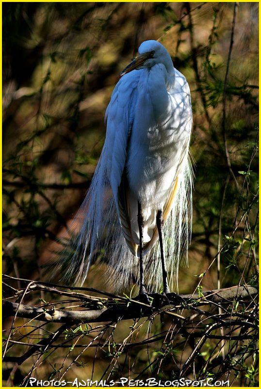 http://2.bp.blogspot.com/-oiELvvJMmOU/Tt-Lkmgm9OI/AAAAAAAACiE/T2wrLgrg3Eo/s1600/crane%2Bbird.jpg