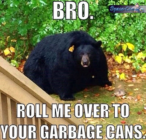 funny animals bear picture