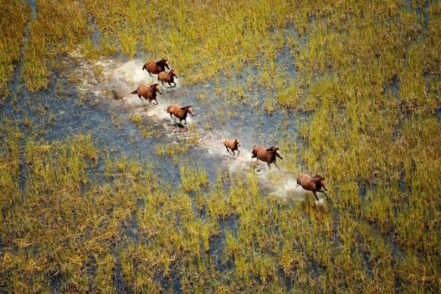 Pemandangan Kuda Liar di Rawa Australia Barat