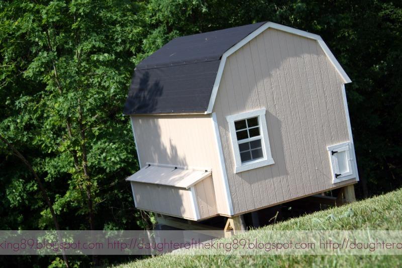 chicken coop inside. chicken coop, inside and