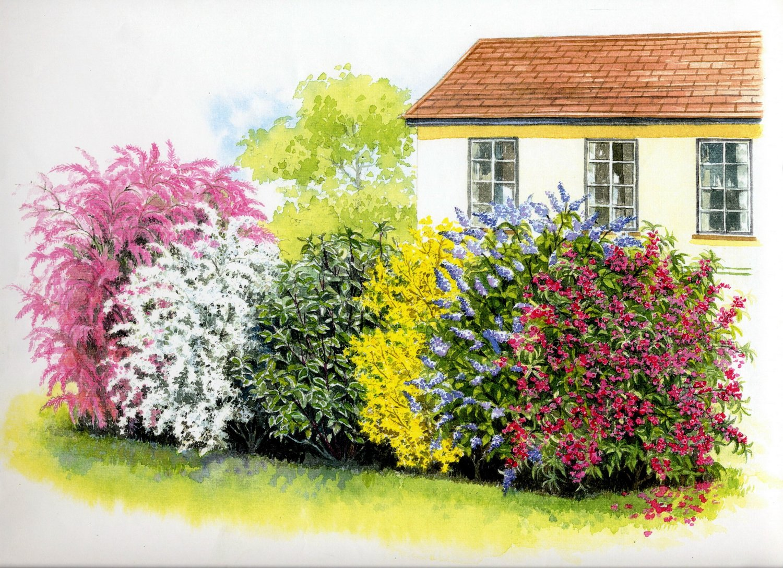 Le siepi miste il fascino della varieta 39 sfumature verdi for Piante colorate da esterno