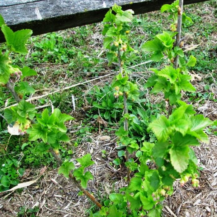 growing herbs indoors