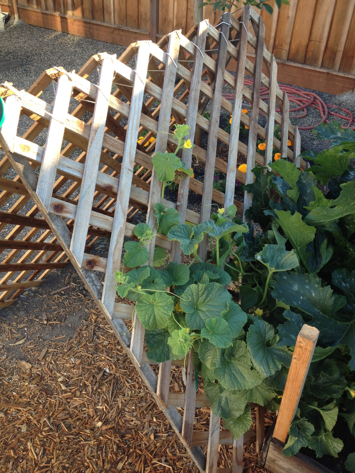 Pyramid Support For Vertical Gardening