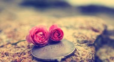 صورة ورود ازهار بينك بمبى وردة زهرة - Love-Rose-Wallpaper