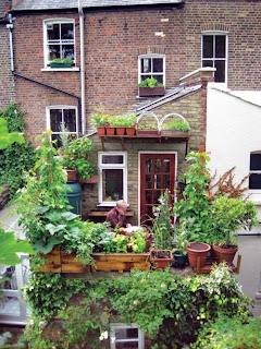 balkon w donicach