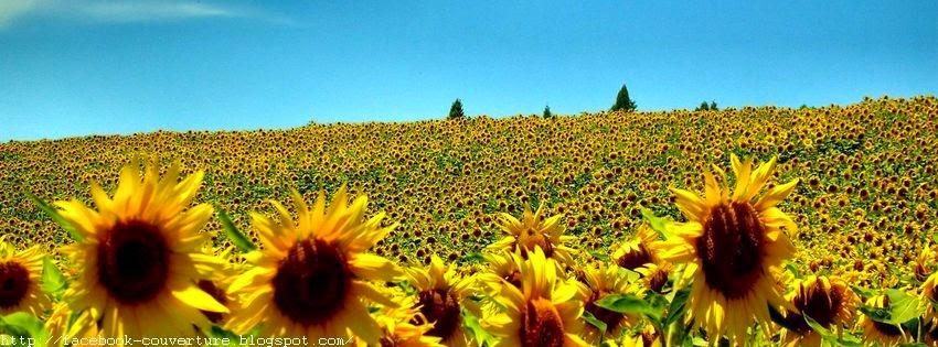 Couverture facebook champ fleur de soleil