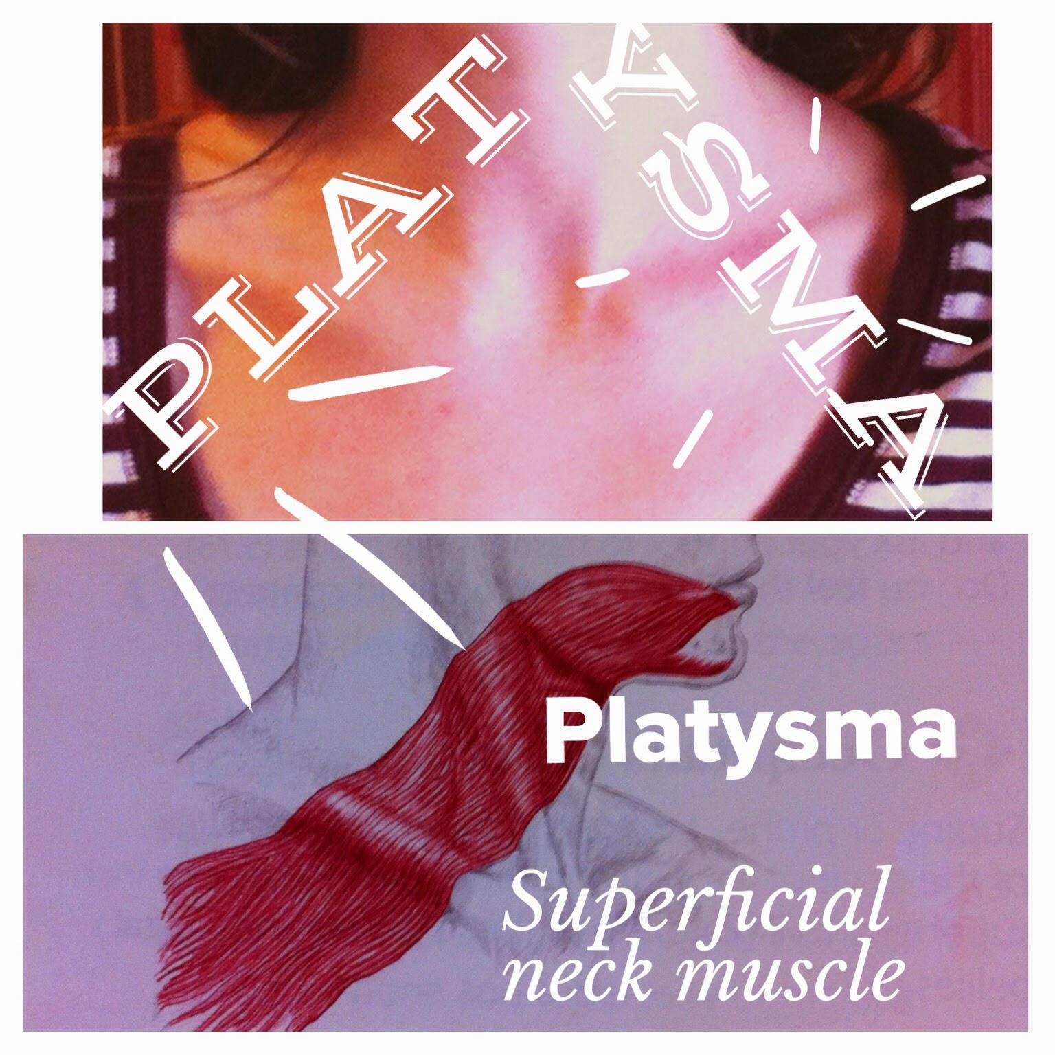The Hip Joint Platysma