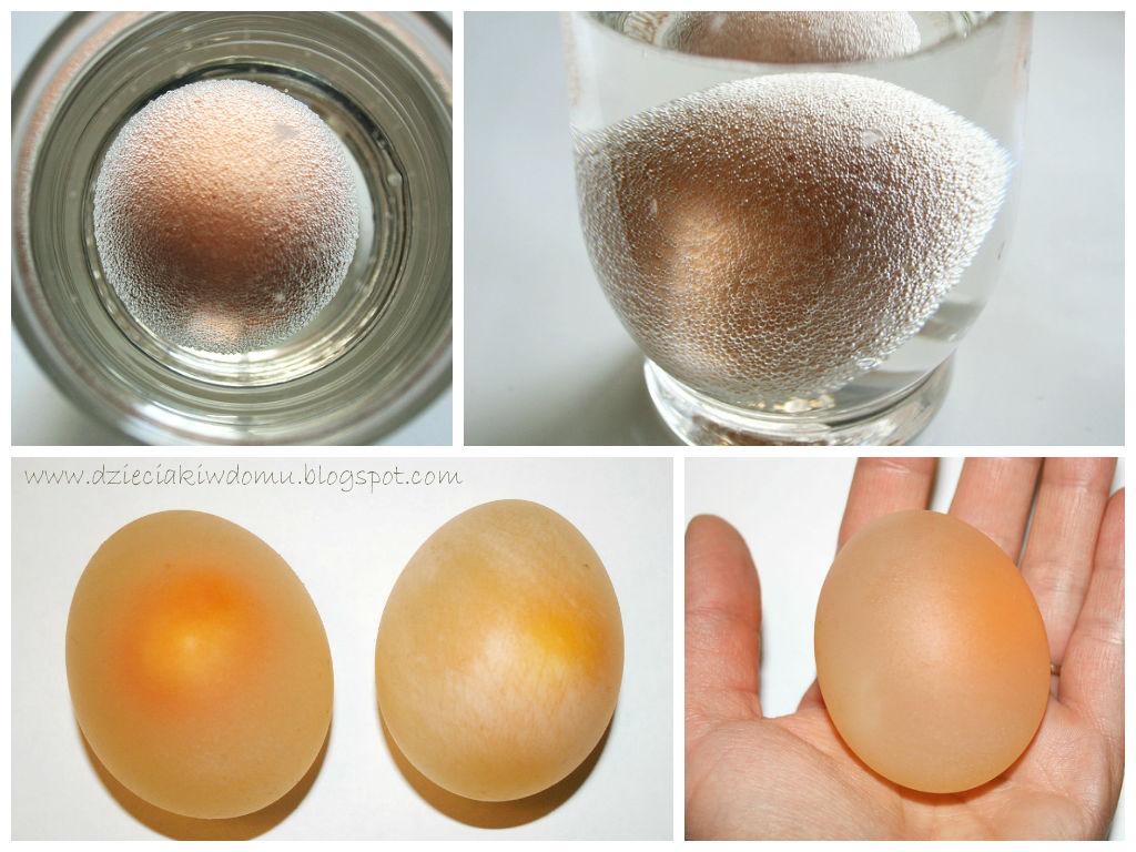 Eksperyment z jajkiem dla dzieci - miękkie i przeźroczyste jajo po zanurzeniu w occie