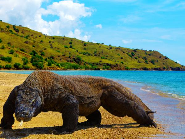 Lokasi Pulau Komodo Nusa Tenggara