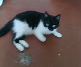 кошка Клава