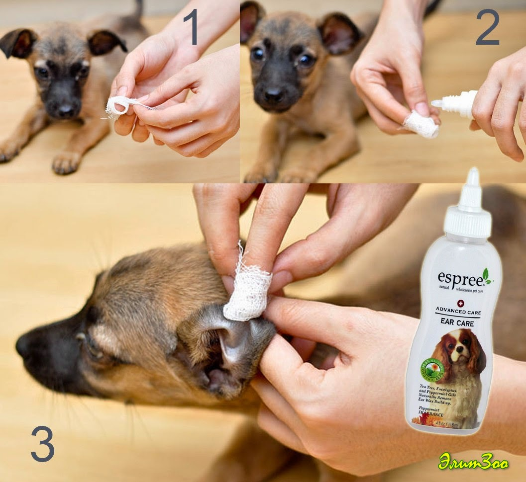 Чем чистят уши собакам в домашних условиях