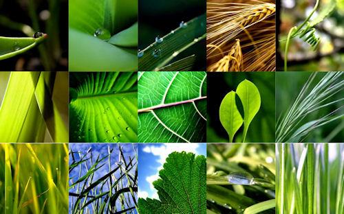 15 fotografías de plantas verdes (contacto natural)