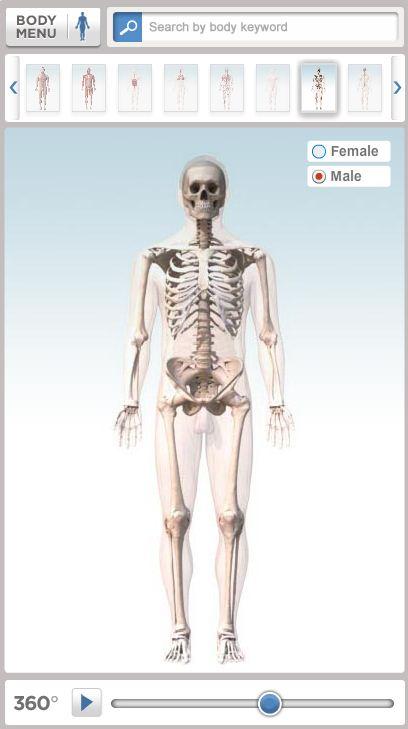 Diagrama interactivo del cuerpo humano en 3D - La Medicina En Tu Vida