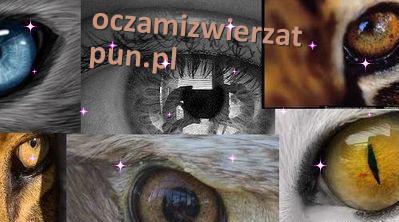 Oczami Zwierząt