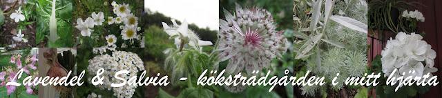 https://lavendelochsalvia.wordpress.com/