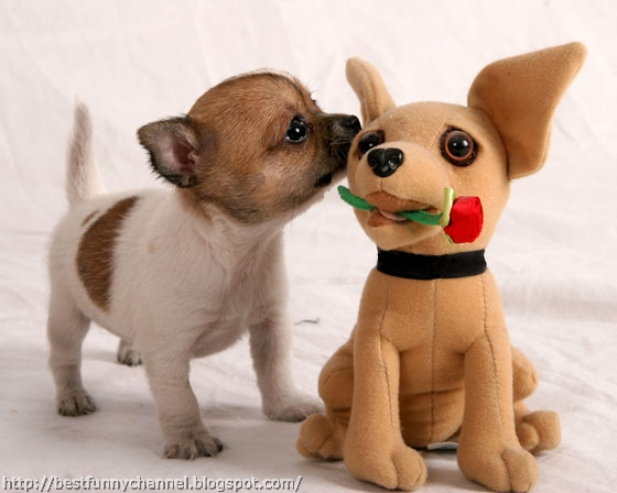 Funny puppy and his friend.