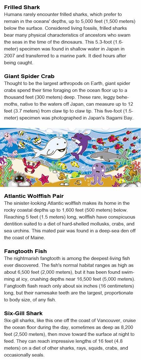 Ocean creatures kids
