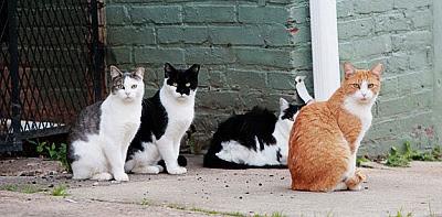 columna Josetxu, gatos callejeros, elogio