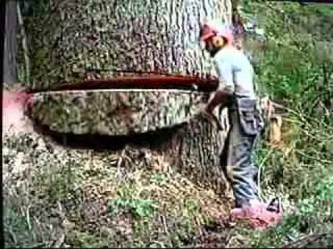 ذهب ليقطع هذه الشجرة.. لكن ما وجده أسفلها جعله يتردد !