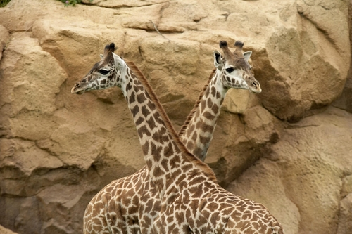 Nashville Zoo At Grassmere Vacation Spots In The World