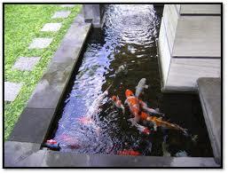 membuat kolam ikan koi | desain kolam minimalis