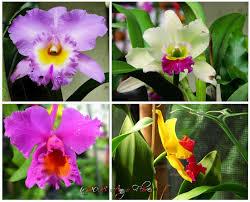 Contoh Makalah : Keragaman Jenis Flora di Papua