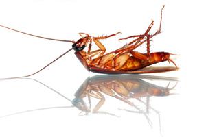 Roaches Kill