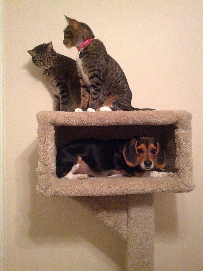 funny animals, animal pictures, dog in cat tree