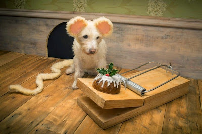 Φωτογράφος μεταμφιέζει το σκυλάκι του κάθε Χριστούγεννα για να φτιάξει αξιολάτρευτες εορταστικές κάρτες