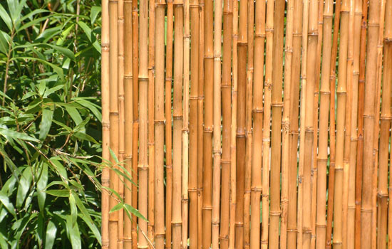 Bamboo grove photo bamboo garden screens Bamboo screens for outdoors