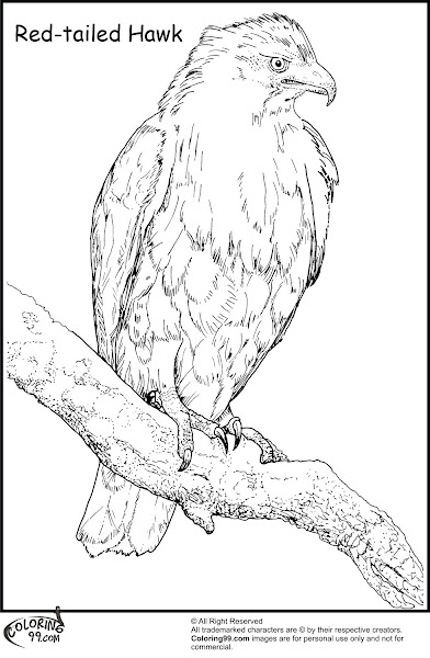 Red-tailed Hawk Coloring Page