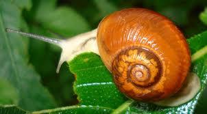 Snails picture