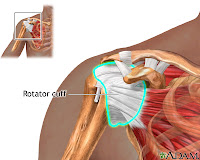 Anatomy of a Rotator Cuff