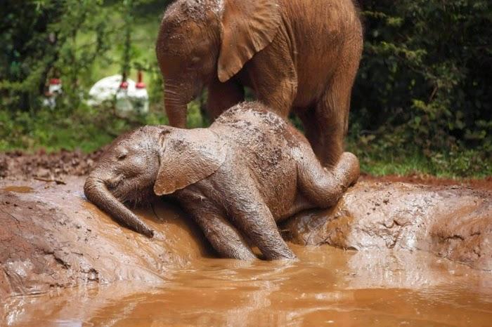 Que expresión más dulce tiene este elefantito