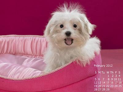 calendar februarie 2012