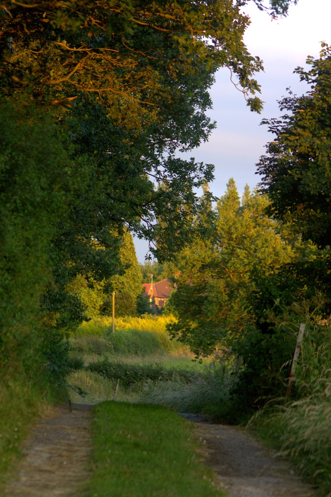 View along the road past the bench at sunset