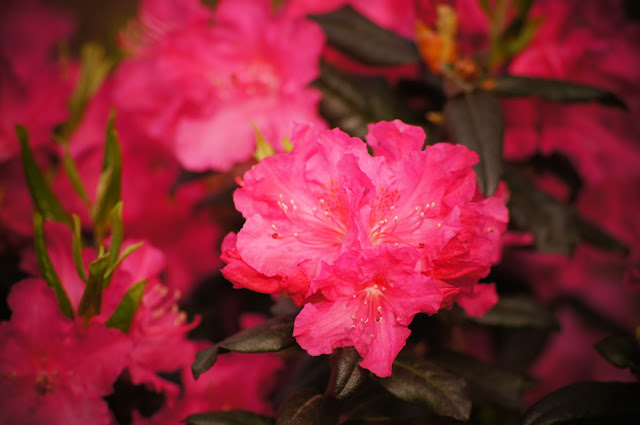 beautiful flowers picture